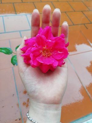 Cô gái có bàn tay nhỏ…