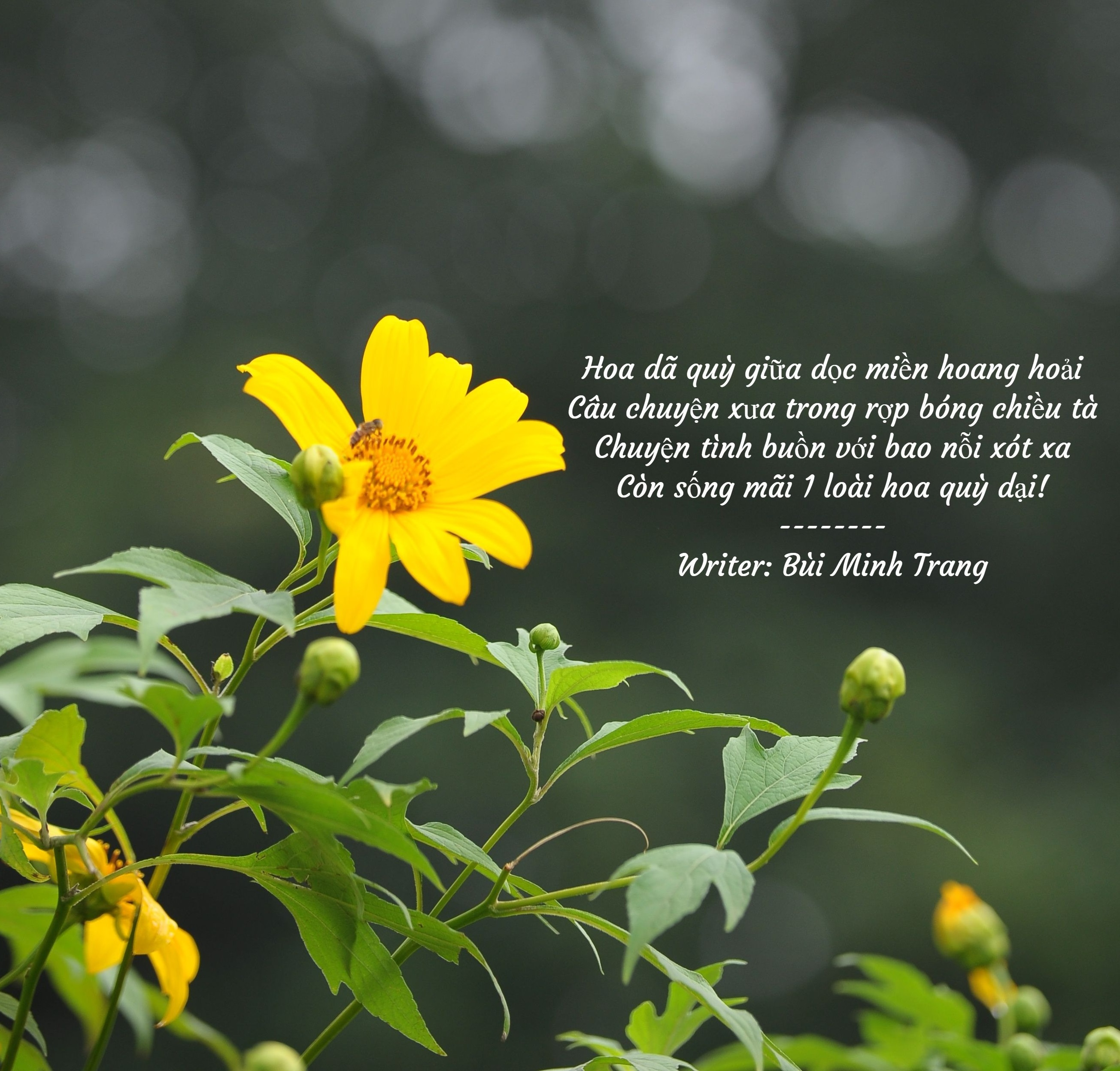 Hoa dã quỳ giữa dọc miền hoang hoải